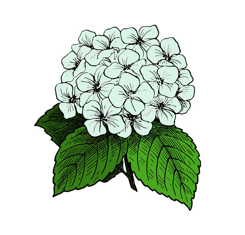 yanature mauritius biology