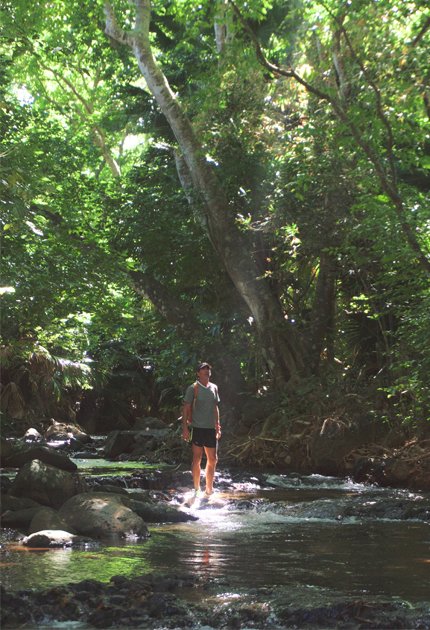 A picture of Yan under a sunbeam in a tropical forest during the wild south hike with Yanature